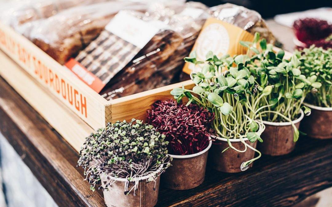 Seedlings, local produce